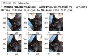 keras-tensorflow-data-augmentation : ejemplo transformaciones gato wiliams