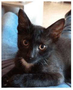 keras tensorflow overfitting foto gato williams