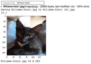 keras-tensorflow-transfer-learning inferencia del modelo con el gato wiliams